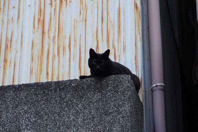 Today's Cat@2017-06-02