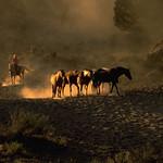 Cavalli controluce