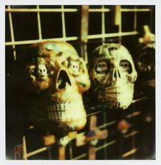 Muertos Skulls