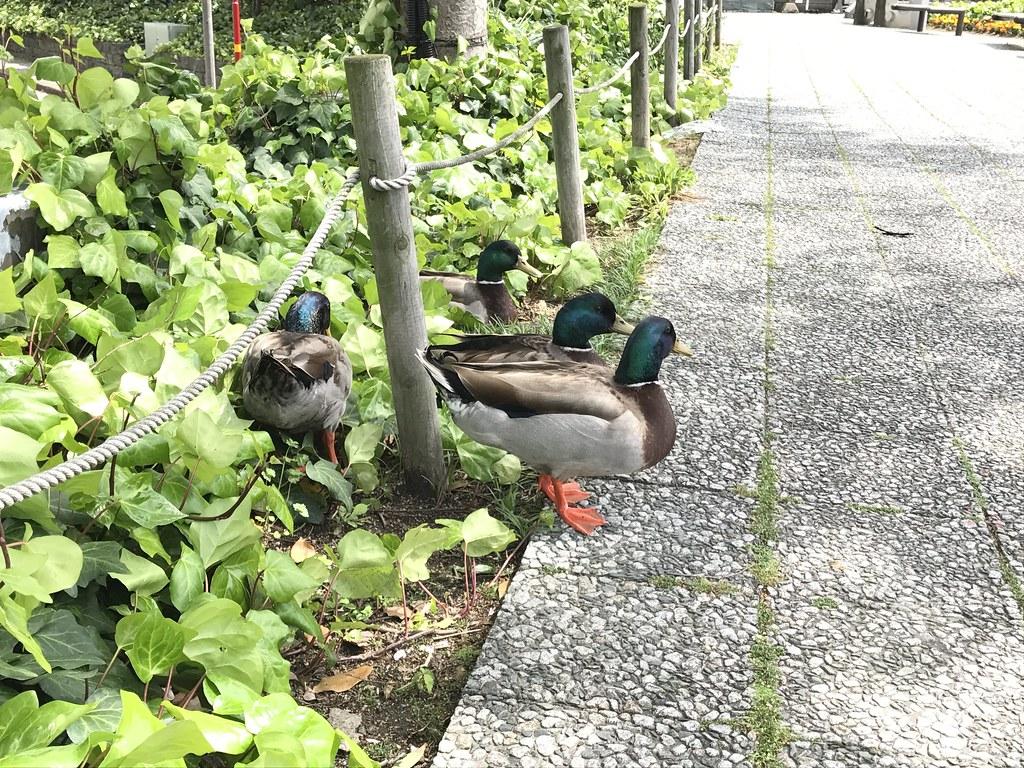 水鳥の集団