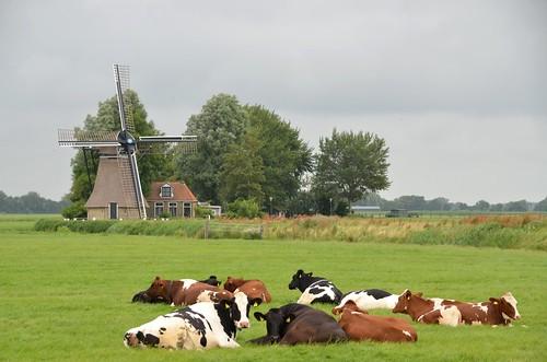1498 Dronrijp, De Poelen