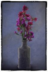 flower.zerene