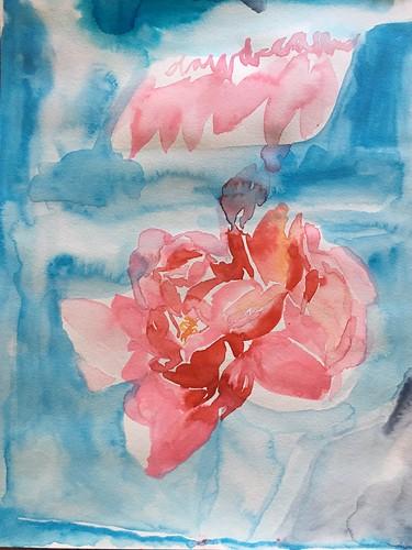 Daydream pink peony