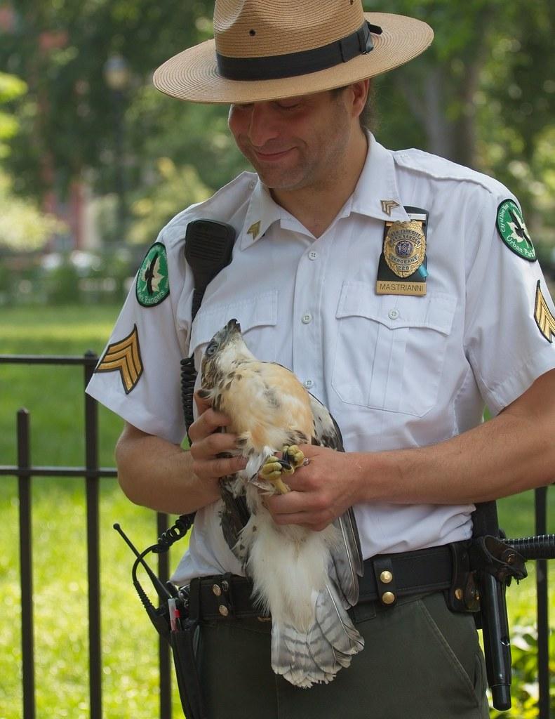 Hawk adoption in Tompkins Square