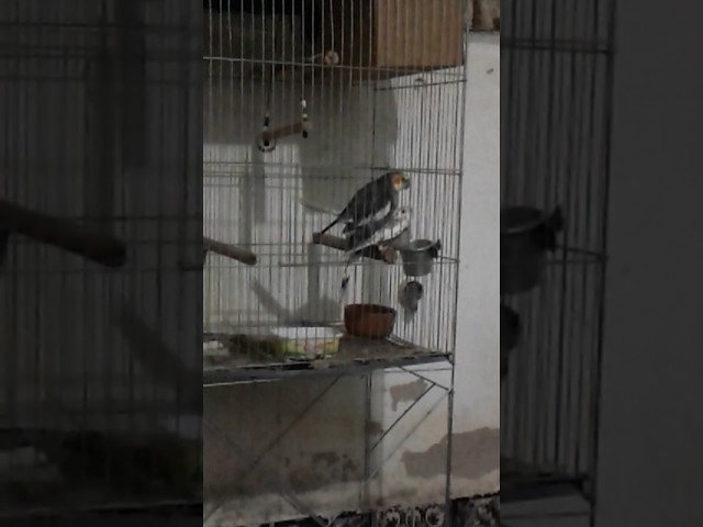 Quero ver como esses passarinhos vão criar com a crise