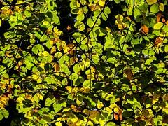 Blätter (10)