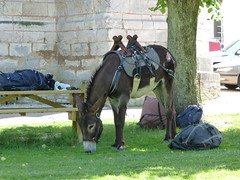 Have Donkey, will travel. - Photo of Migé