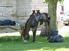 Have Donkey, will travel.