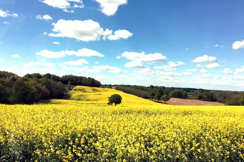 Rapsfeld auf dem Weg nach Bourg-en-Bresse