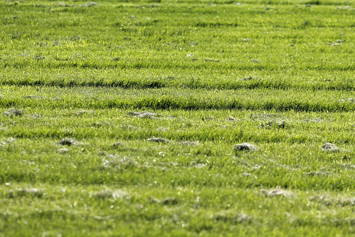 Failed Grass Cutting
