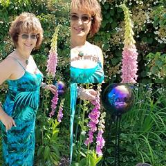 Foxglove, as tall as me, summer garden
