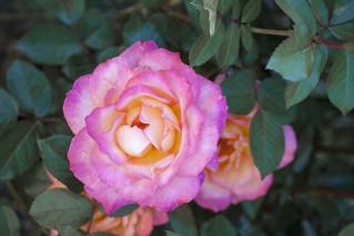 Brookside Gardens  (52)