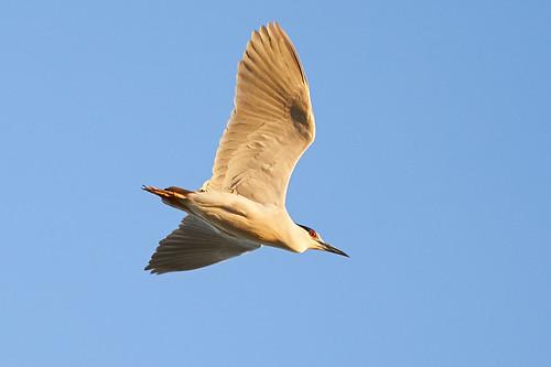 sony a9 70200 birds new camera bif landscape davis ca causeway yolo bypass