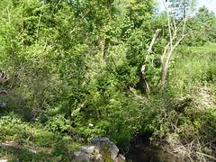 RNR de l'Escaut Rivière (17)