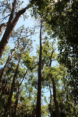 ronpersan usa 2017 palmcoastfl floridausa florida crahamswamptrailfl hike outdoors