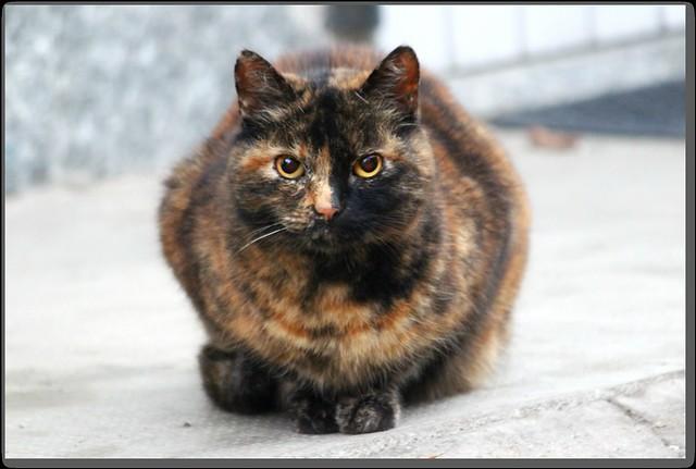Old kitty Minou