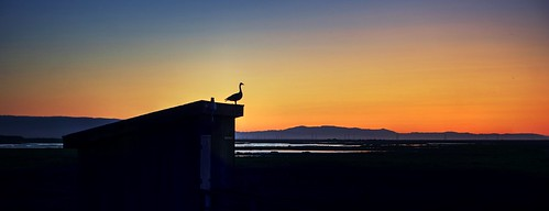 alviso california sanjose siliconvalley sanfranciscobay sanfranciscobayarea day clear dusk bay outdoor sky sunset shed silhouette bird birdsilhouette donedwardssanfranciscobaynationalwildliferefuge donedwardsnationalwildliferefuge donedwards wildliferefuge minimalist minimalism 1xp raw nex6 photomatix selp1650 hdr qualityhdr qualityhdrphotography fav200