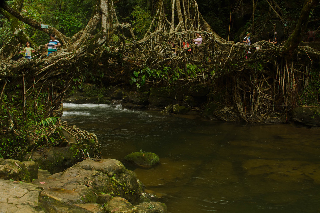 Living Root Bridge: Mawlynnong, Meghalaya