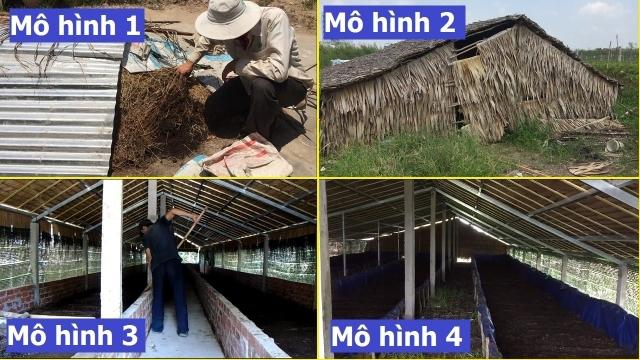 mo-hinh-nuoi-trun-que-khep-kin-thanh-cong-tieu-bieu-kimgiatrang-com