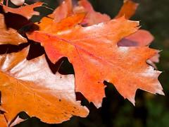 Blätter (8)