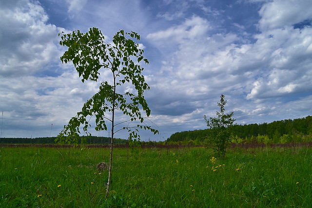 Saplings on the open space