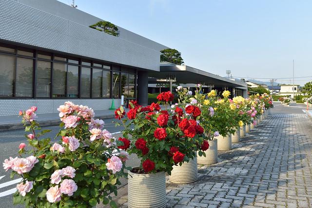 バラのまち_粕屋町役場