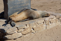 DSC06064 - NAMIBIA 2017