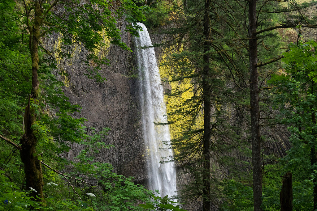 A horizontal view of Latourell Falls through the forest