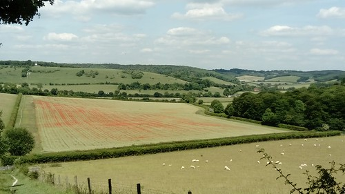 Poppy-filled field, Turville, Cobstone Hill with Windmill