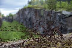 taggig tråd , Mjösjöfortet, Boden