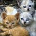 Los tres amigos! by MarkC333