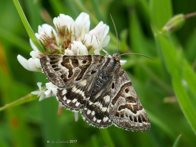 Mother skipton moth, Panasonic DMC-TZ100