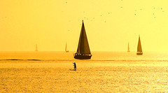 Sailing in a golden sea - Tel-Aviv beach