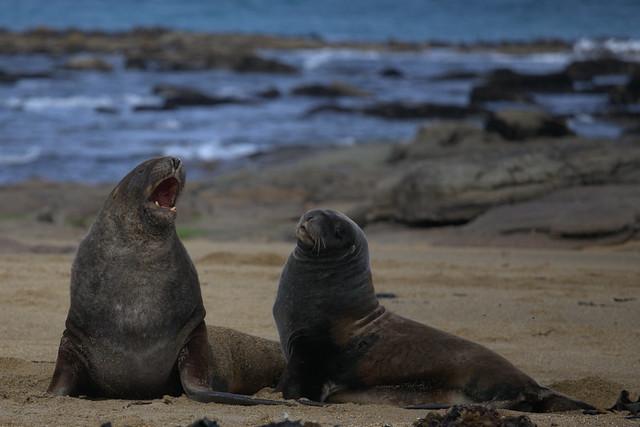 I Sea Lions