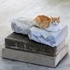 Köttur í Aþenu (Cat in Athens)