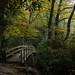 Tanawha Trail Bridge by Matt Williams Gallery
