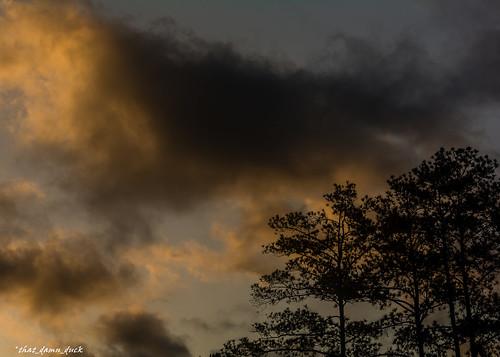 nature trees clouds sunset sundown