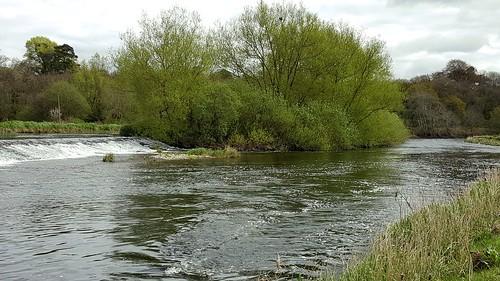 River Barrow at Goresbridge