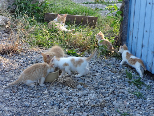 Waif Kittens 7 Weeks 12-Jun-2017