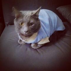 #DonCato #gato #Polar