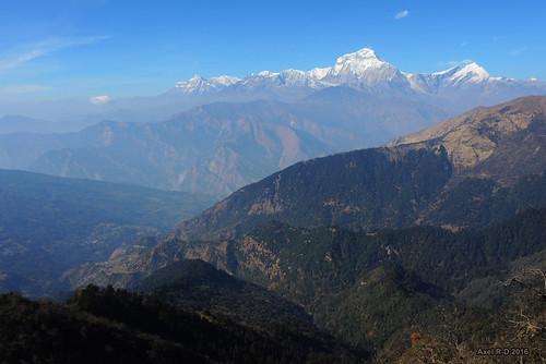 dhaulagiri montagnes muldhai nepal tukcheri