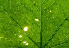 Leaf colour-001