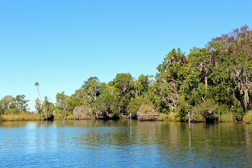landscape scenery bay water waterfront trees palmtrees crystalriver florida