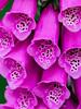 Flower I