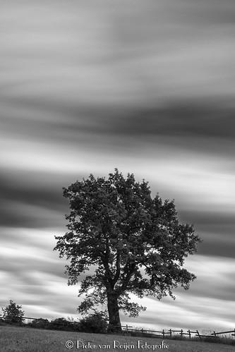 Ten minutes tree.