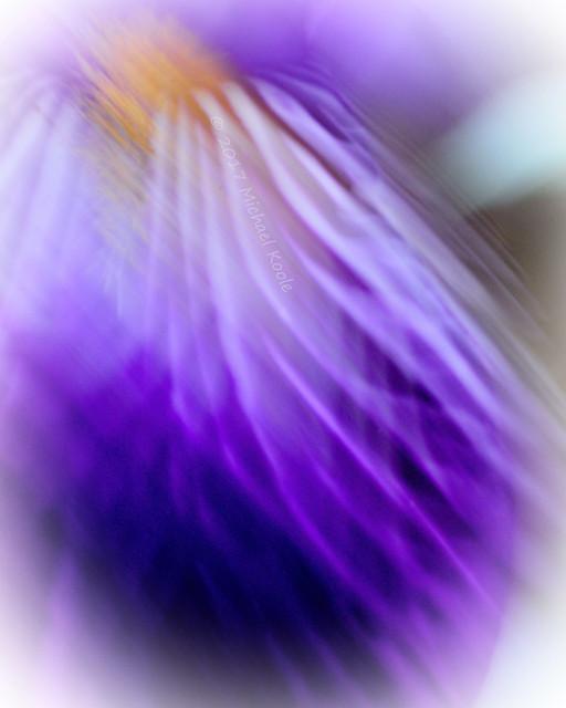 Iris in the Breeze - Week22