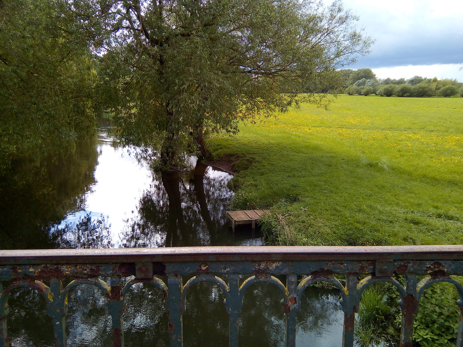 River Thame and buttercups