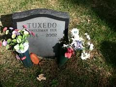 Tuxedo at Hartsdale Pet Cemetery.