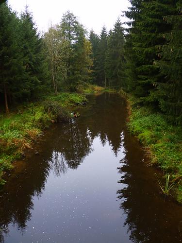 Dans la forêt de Bourseigne-Neuve