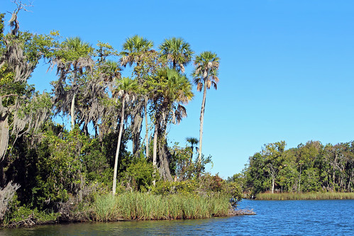 landscape scenery bay water island waterfront palmtrees crystalriver florida